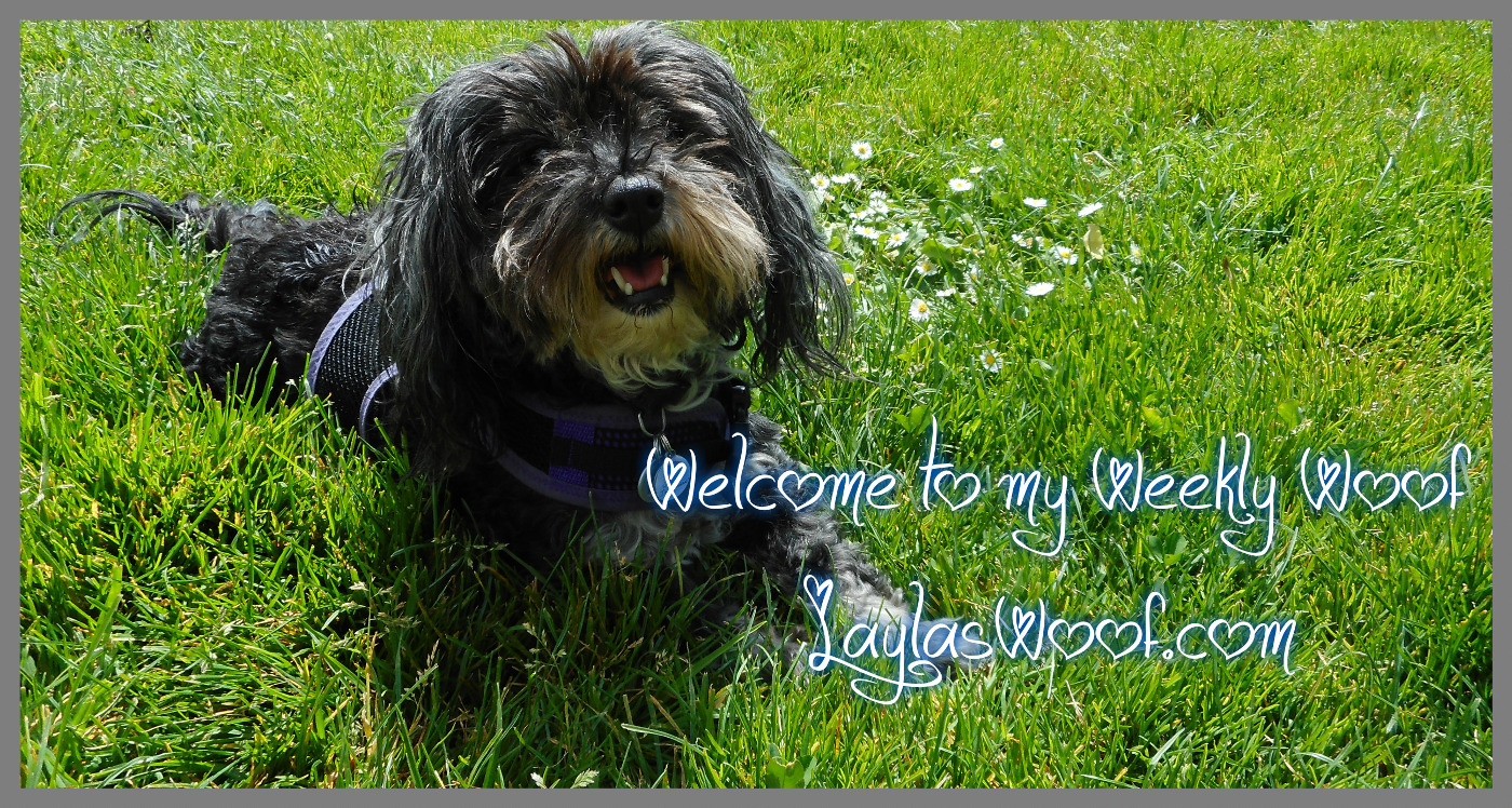 Layla's Woof