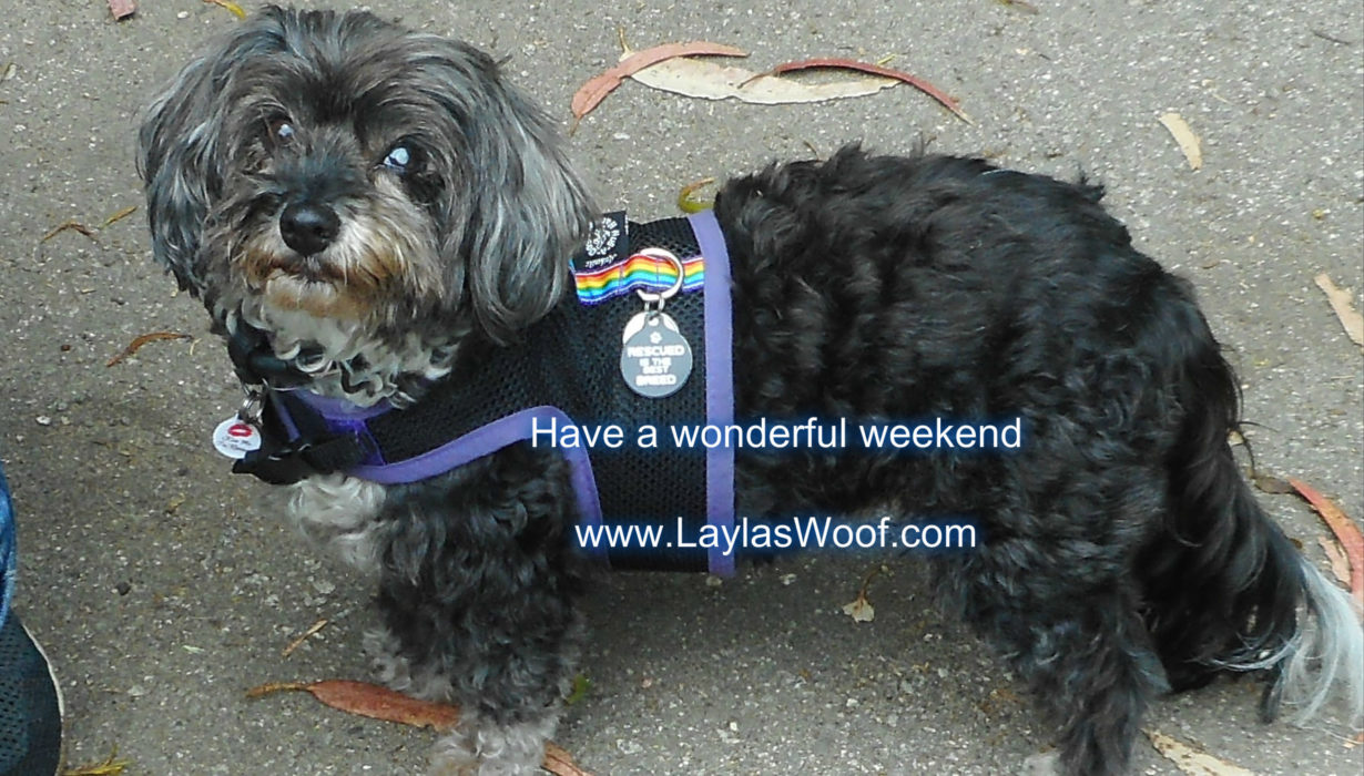 Layla's Woof – Page 2 – Diary of a Rescued Dog