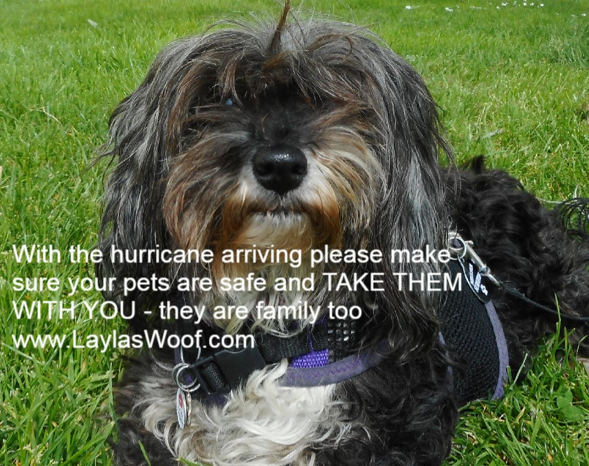 Layla's Woof – Diary of a Rescued Dog