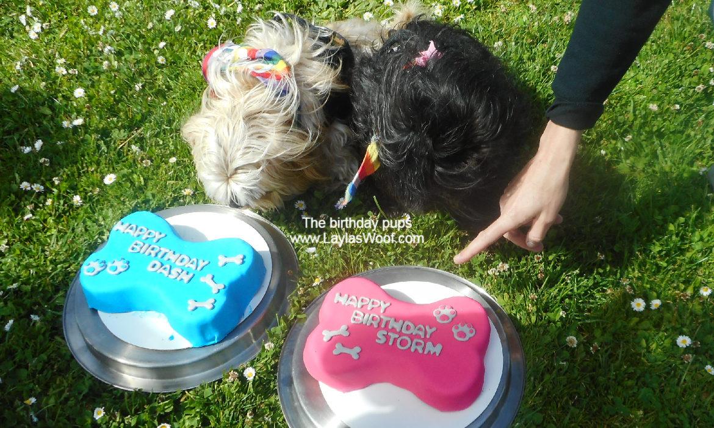 Birthday cake time